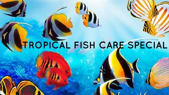 Tropical Fish Care Special https://shar.es/1EDoW0   #RentAquarium, #RentanAquarium, #AquariumLondon, #LondonAquarium, #London