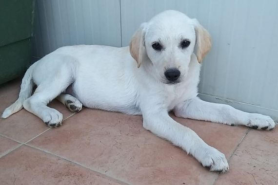 Streunerherzen E V Hunde Tiere Tierarzt