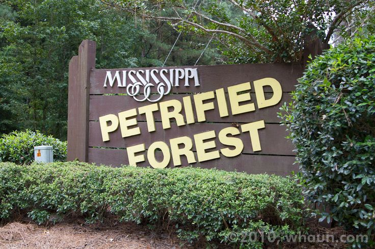 petrified forest, ms | Mississippi Petrified Forest, MS - Hauns Go West