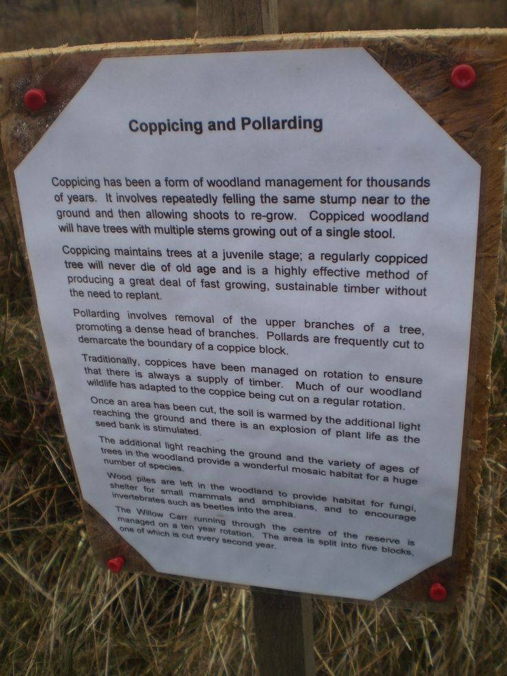 Information about coppicing and pollarding from Foxglove Covert, Catterick Garrison, North yorkshire, UK 2015.