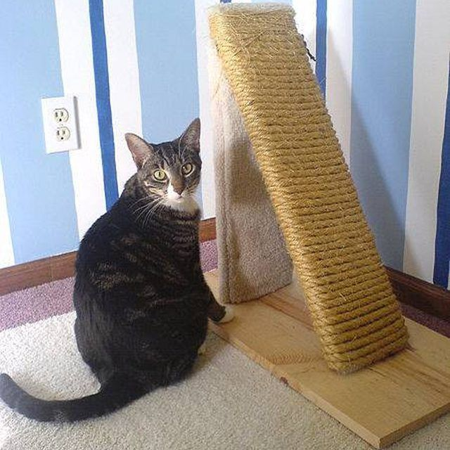 Scratching posts that use natural fibers are gaining in popularity.