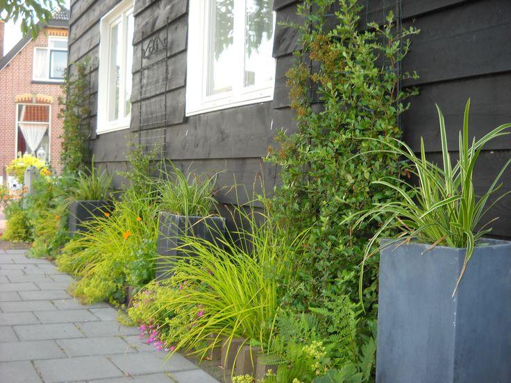 Een geveltuin kun je ook een moderne uitstraling meegeven. Bijvoorbeeld door het gebruik van siergrassen. Zwenkgras (Festuca gautieri) of Zegge (Carex) zijn geschikt.