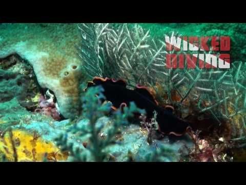 Komodo Liveaboard Flatworm http://wickeddiving.com/wd-liveaboards/komodo-liveaboard/