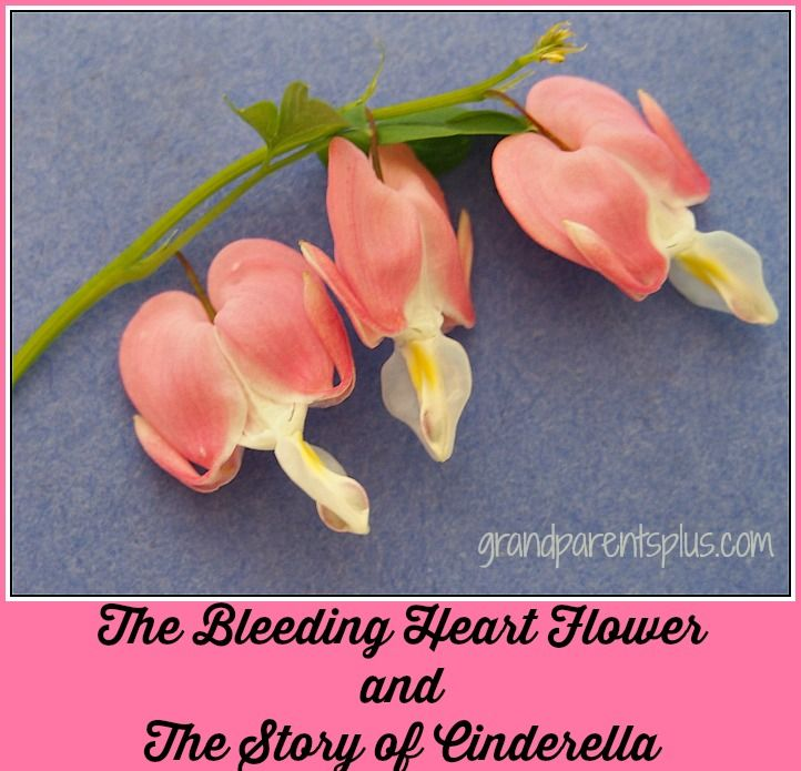 Tell This To Your Children Cute Story In A Flower Bleeding Heart Flower Bleeding Heart Flower Heart