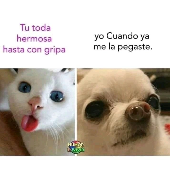 Pin De Ana Mora En Memes V Memes Divertidos Memes De Enfermos Meme Gracioso