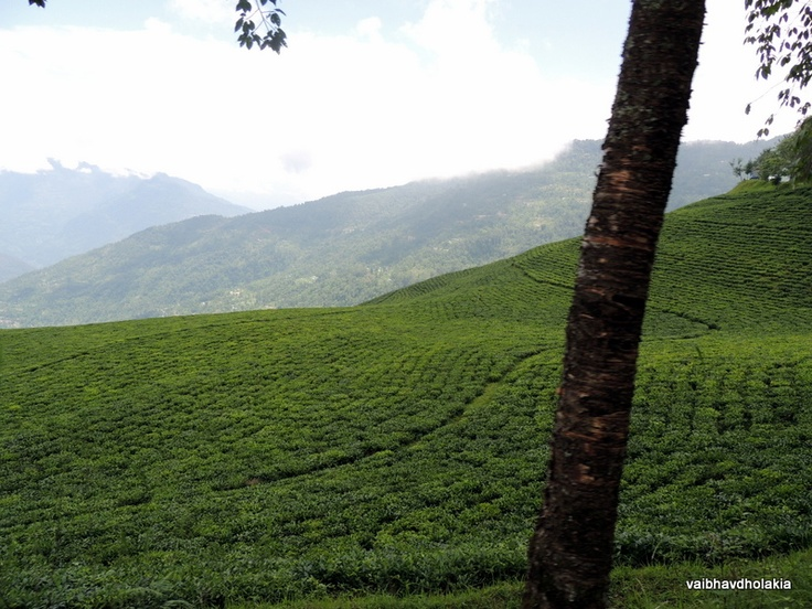 The beauty of Tea Gardens