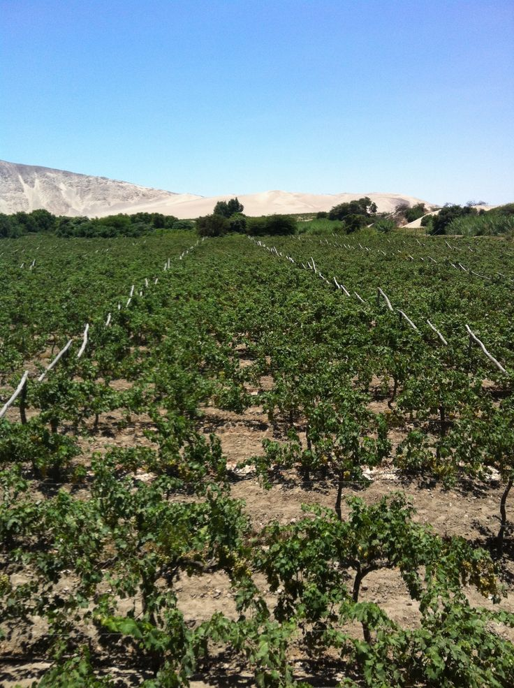 The vineyards and beautiful landscape at Viejo Tonel