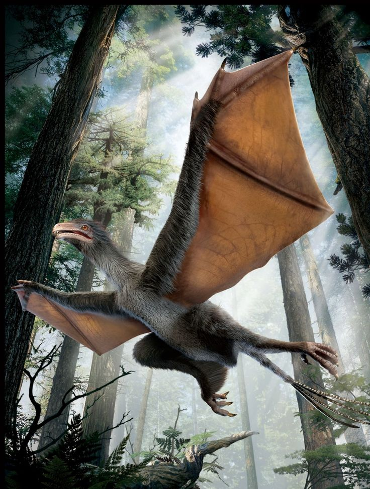 An artist's impression of the newfound dinosaur with batlike wings.