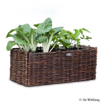 Balkonmand Medium voor Sla - Bakken en zakken - Ademende tas met daaromheen een natuurlijke wilgenmand waar uw sla in kan groeien, maar natuurlijk ook voor andere planten en bloemen. In de mand (zonder bodem) staat een speciale, ademende tas (niet afgebeeld) gevuld met grond voor de optimale condities. Na het seizoen gooit u de tas leeg en vouwt alles klein op voor het volgende seizoen. Mooie maat voor sla.    Maten: 70x35cm, 30cm hoog.   Inhoud: 62 Liter