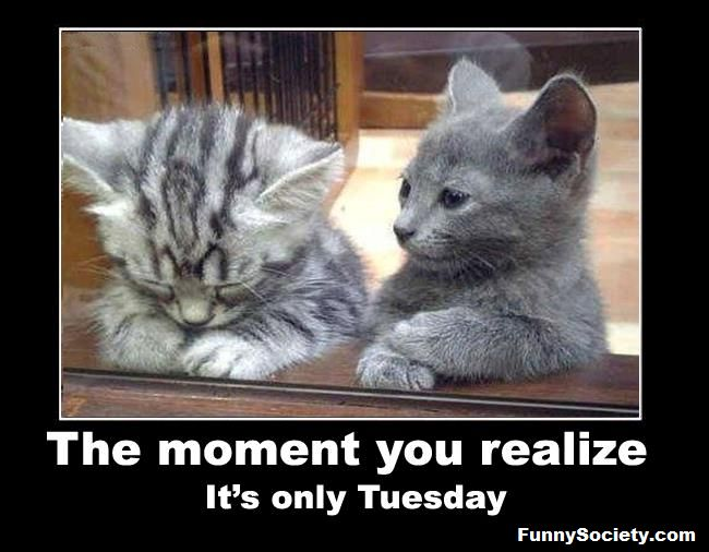 TRUTH.....Its Only Tuesday