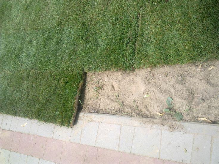 Przycinanie trawy z lolki