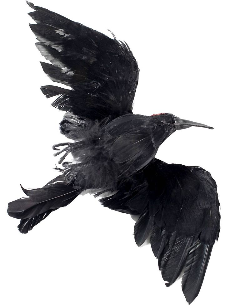 dead crow with 15 wingspan new for 2014 halloween props at frightcatalog com - Fright Catalog Halloween Decorations