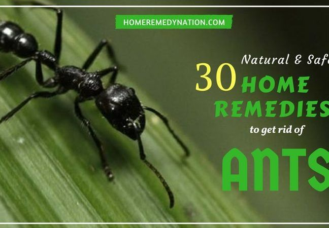 30 Home Remedies To Get Rid Of Ants From Home Kitchen And Garden