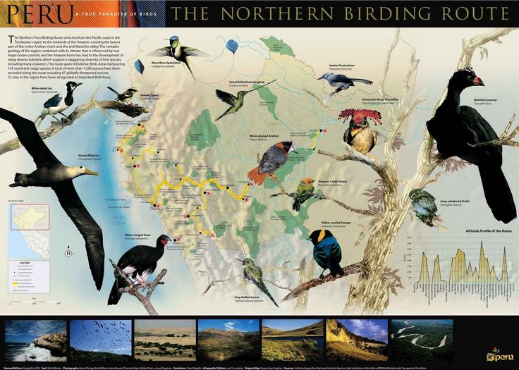 National Birds Of America >> Birds from Peru, Touristic National Route Map   Traveling? I need info...   Pinterest   Peru ...