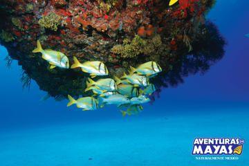 Plongée Xtreme avec masque et tuba à Cancun