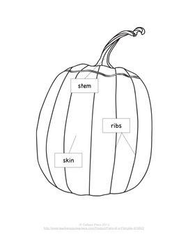 parts of a pumpkin. Black Bedroom Furniture Sets. Home Design Ideas