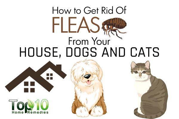 house dog fleas and household pests on pinterest. Black Bedroom Furniture Sets. Home Design Ideas
