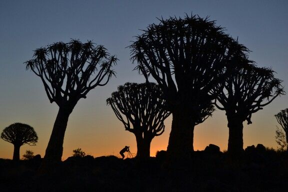 #quiver tree #namibia #photography #travel