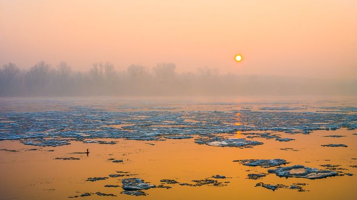 Misty Sunrise - Sunrise over the icy Danube on a foggy morning with a cormorant swimming into the scene.