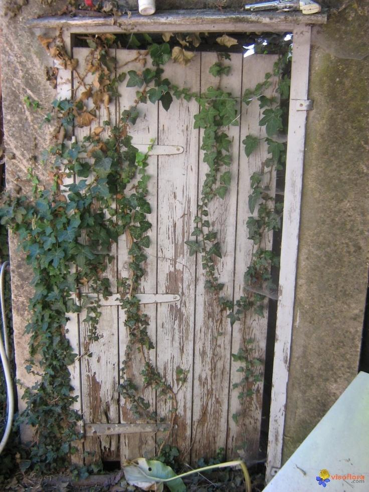 Lierre sur une vieille porte ouvrir des portes et des for Exterieur vieille maison