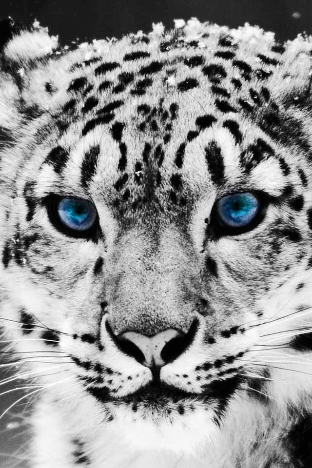 Stunning and Powerful Leopard Wallpapers
