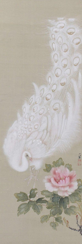 berengia:White Peacock, Kikuchi Shokin. Japanese hanging scroll painting