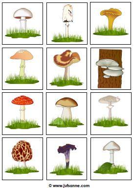 tunnista sieniä