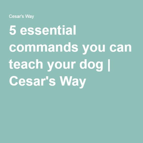 5 essential commands you can teach your dog | Cesar's Way