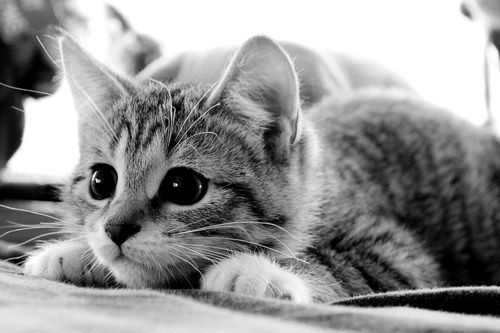 Love those big kitty eyes, when they're about to pounce! :)