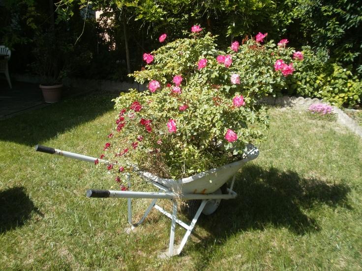 Cariola con rose