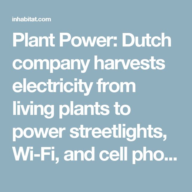 Plant Power: Dutch company harvests electricity from living plants to power streetlights, Wi-Fi, and cell phones | Inhabitat - Green Design, Innovation, Architecture, Green Building