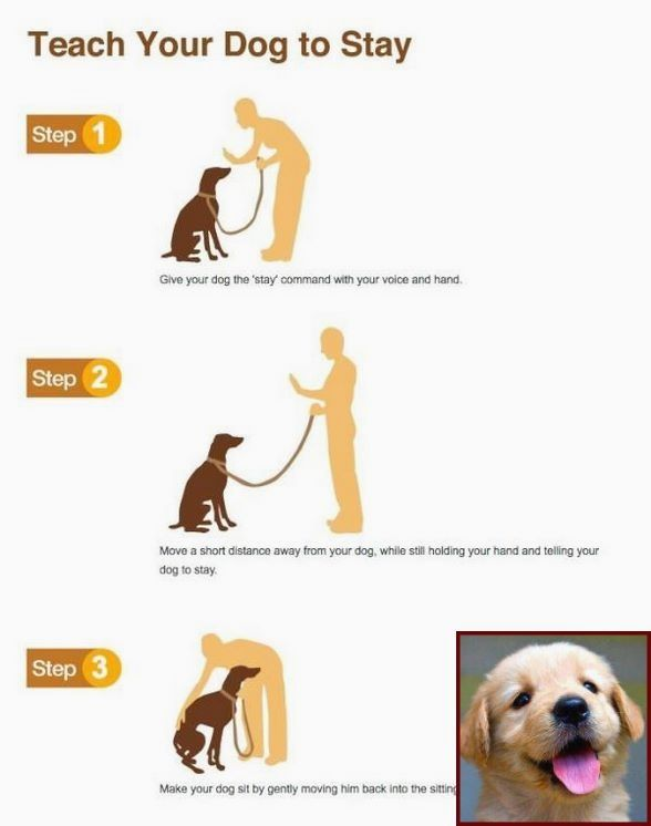 1 Have Dog Behavior Problems Learn About House Training A Six