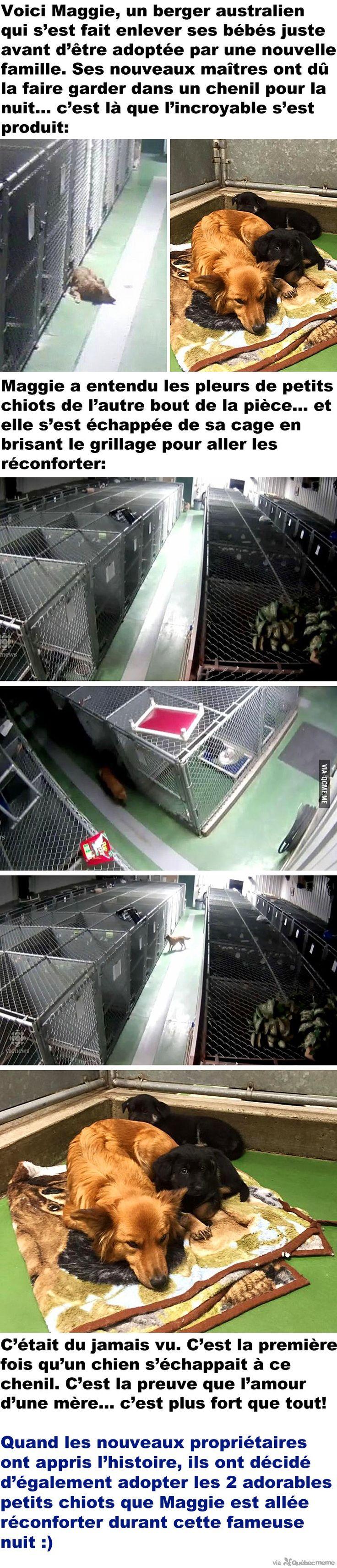 Un chien s'échappe d'un chenil pour réconforter des petits chiots