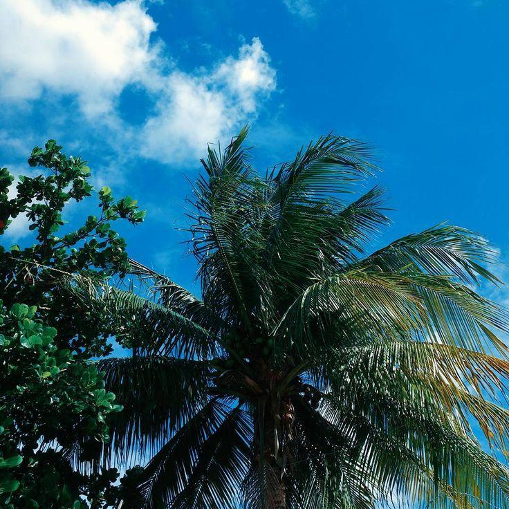 """15 curtidas, 1 comentários - R A Y E L E  A R A Ú J O (@rayele.araujo) no Instagram: """"O sol resolveu dar às caras nesse domingo.#boatarde.#sun. #domingo.#brasil.#alagoas. 🙏❤🌴🌞"""""""