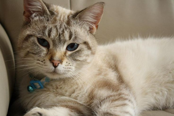 kidney failure in cats final stages