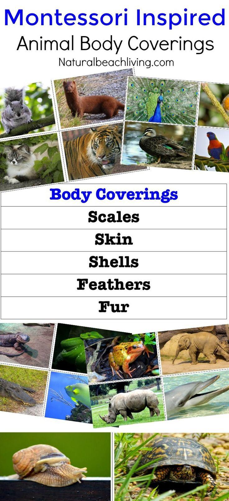 Montessori inspired zoology, animal activities for preschool and kindergarten, free printables, Montessori Learning activities, Montessori animal ideas,