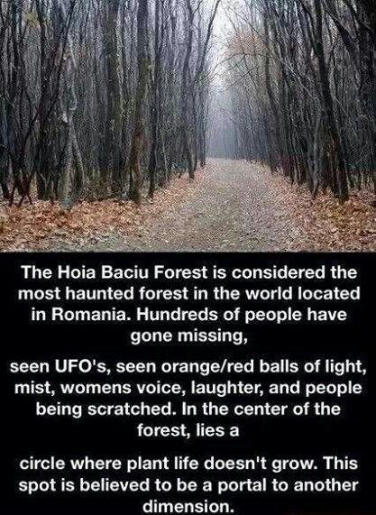 Haunted forest.
