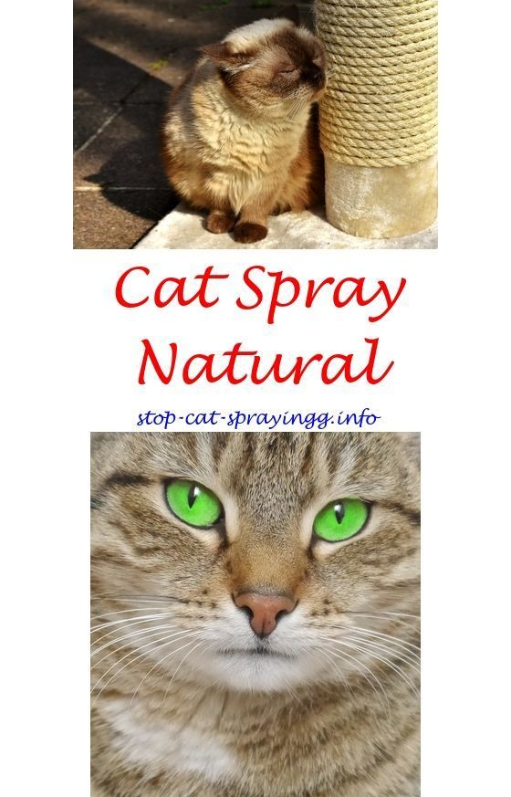 roundworms in cats treatment over the counter
