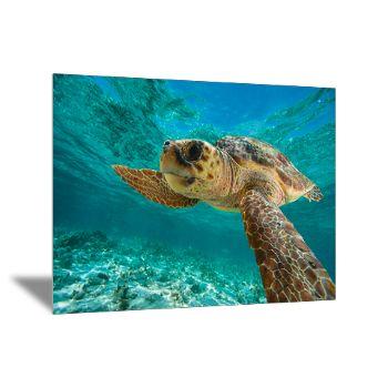 Uma tartaruga cabeçuda nada na marina da Reserva Natural Hol Chan. Esta reserva marinha fica ao largo da costa de Belize. São 18 km² de recifes de corais, camas de algas marinhas e florestas de manguezais.