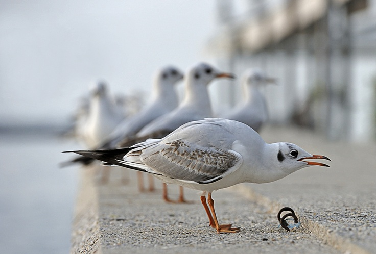 Seagulls//