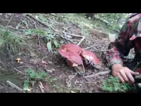 funghi porcini - YouTube