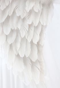 blanc | white | bianco | 白 | belyj | gwyn | color | texture | form | weiss | feathers | wing
