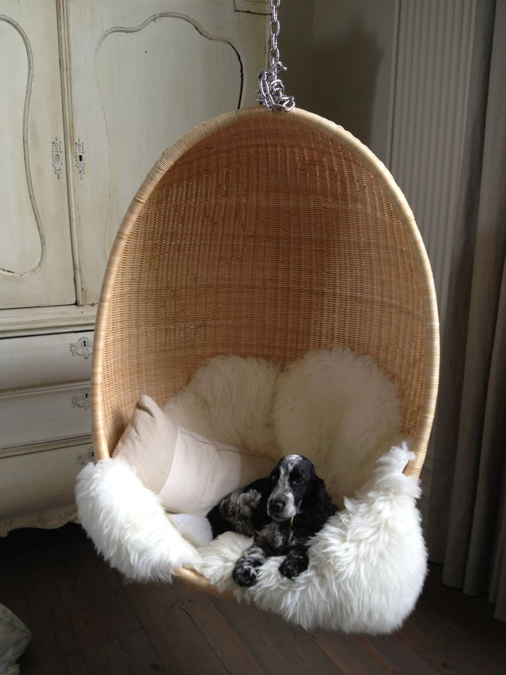 Stella relaxing in our daughters hanging chair