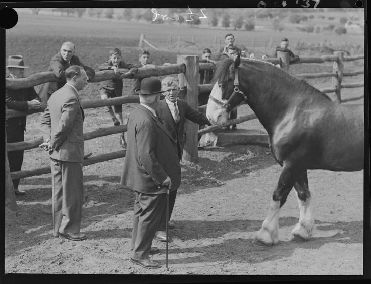046473PD: Judging Clydesdale horse, 1937.  http://encore.slwa.wa.gov.au/iii/encore/record/C__Rb2396470__SEquestrian%20events%20at%20Perth%20Royal%20Show__Orightresult__U__X6?lang=eng&suite=def