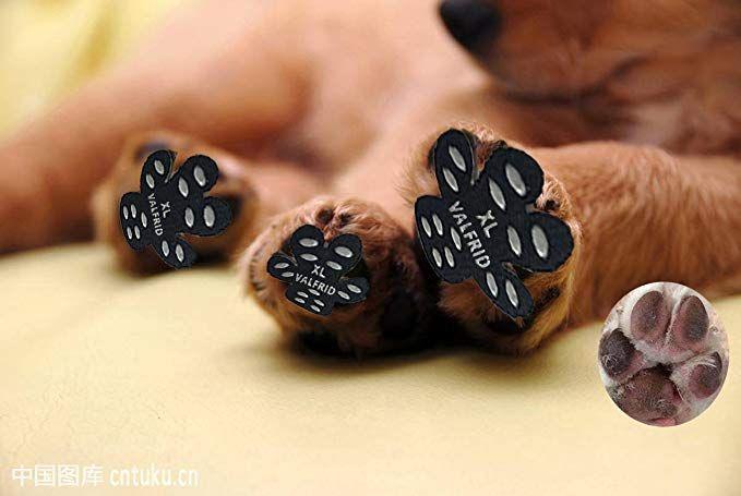 2067cd2d90f0f47c2390587f1e23c1ed - How To Get Super Glue Off Dog S Paw