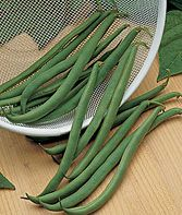 Tenderpick Bush Bean Seeds and Plants, Vegetable Gardening at Burpee.com
