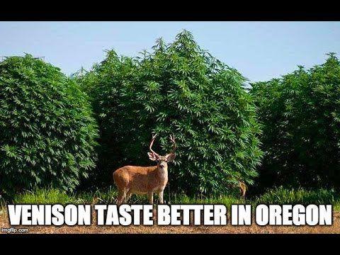 17 best images about marijuana growers from oregon on for Indoor gardening rainier oregon