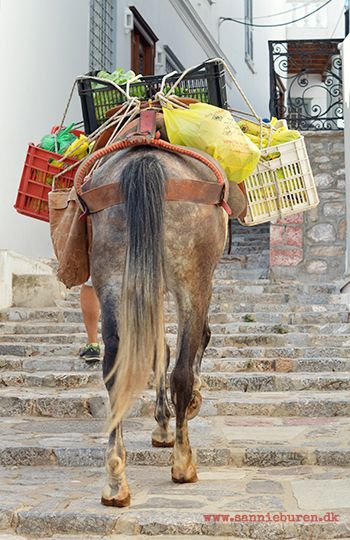 Impressions from Hydra, Greece, September 2016 © Sannie Terese Burén #Mules #Yellow