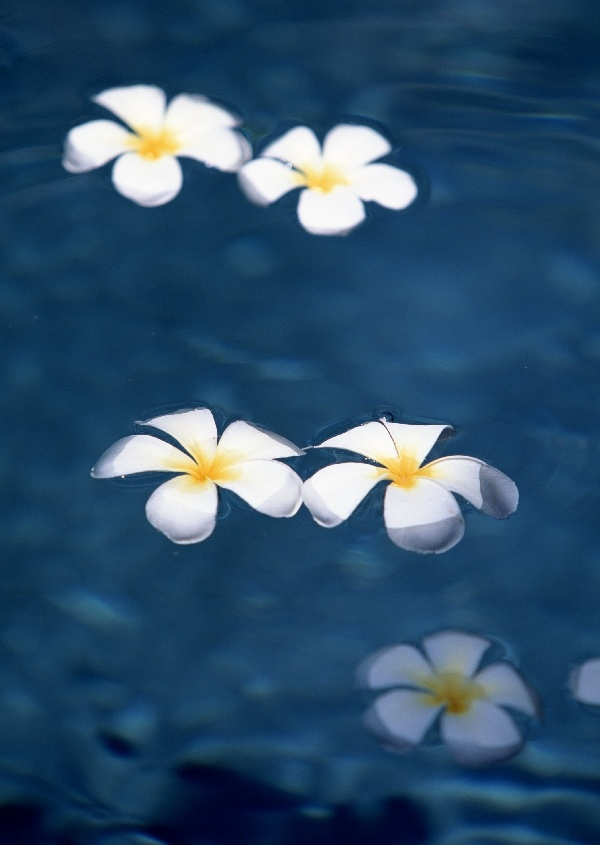 Google Image Result for http://fairytattoo.org/wp-content/uploads/hawaiian-tropical-flowers-01.jpg
