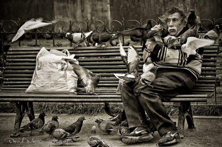 Photograph El amigo de las palomas (II) // Doves' friend (II) by David Martín on 500px